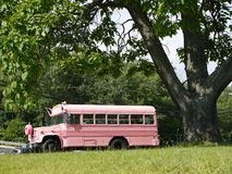 Vehicle: modified pink school bus side royalty free stock photo