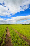 Vehicle Path in Field Stock Photography