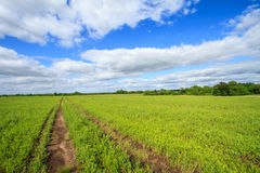 Vehicle Path in a Field Stock Image