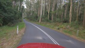 Vehicle POV driving along narrow road in eucalyptus forest in foggy weather