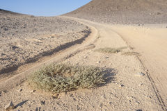 Vehicle tracks through an arid desert Royalty Free Stock Image
