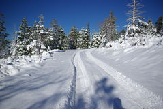 Vehicle tracks in fresh snow. Tire tracks in fresh snow on a deserted mountain trail Stock Photo