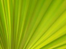 Veias das folhas Foto de Stock
