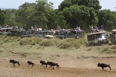 Veicoli a grande espansione, Kenia di safari Fotografie Stock Libere da Diritti