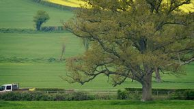 Veicoli sulla grande quercia di passato rurale della strada video d archivio