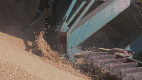 Veicolo moderno del caricatore del grano e del macchinario di agricoltura di separazione, macchina agricola per lavoro con il rac stock footage