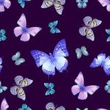 Veilchen des Schmetterlinges 07 vektor abbildung