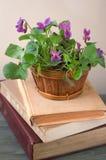 Veilchen in einem Korb auf den Büchern Lizenzfreie Stockbilder