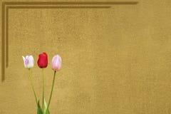 Veilchen zwei eine und eine rote Tulpe Stockfotografie