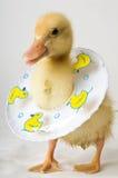 Veiligheid Duckie Royalty-vrije Stock Foto's