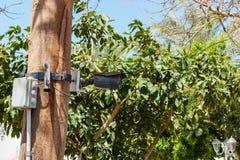 Veiligheidscamera op voorzijde van palmen De camera van kabeltelevisie royalty-vrije stock fotografie