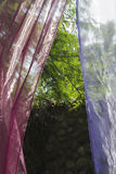 Veils in the garden Stock Photography