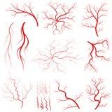 Vein set, Human vessel, eye veins vector. Vein set, Human vessel, blood arteries, eye veins silhouette, health red artery system. Vector Royalty Free Stock Images