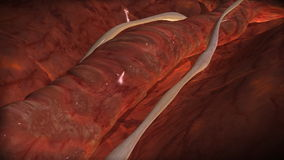 Vein. A video animation of vein in loop stock footage