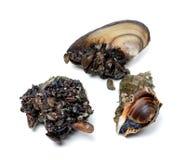 Veined rapa whelk и мидии реки (anodonta) Стоковые Изображения RF