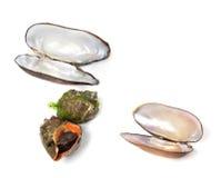 Veined rapa whelk и раковины мидий Стоковые Изображения RF