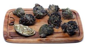 Veined rapa whelk и устрица на деревянной доске кухни Стоковое Фото