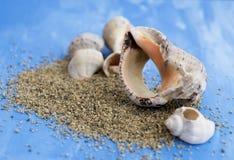 Veined rapa whelk, or Rapana venosa and sand on bright blue background. Closeup Stock Image