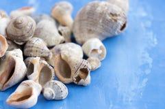 Veined rapa whelks, or Rapana venosa, on bright blue background. Closeup Stock Photography