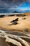 veines de mer Image libre de droits