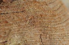 Veining of a piece of wood. Close up Royalty Free Stock Photos
