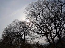 Veins of the sky stock photo
