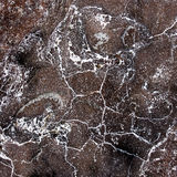 Veins on the stone texture Stock Image