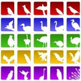Veinticinco iconos del pájaro Fotos de archivo