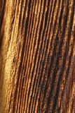 Veiny wood pattern Stock Photography