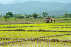 Veiw поля Таиланда Стоковая Фотография