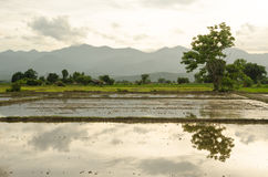 Veiw av fältet Thailand Arkivfoto