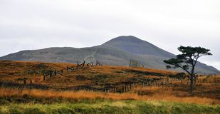 Veiw of the Moor at Strath Halladale. Stock Images