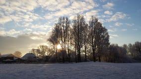 Veja árvores da calha fotografia de stock royalty free