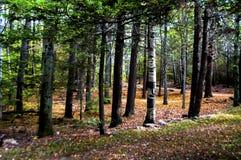Veja as madeiras através das árvores Imagens de Stock Royalty Free