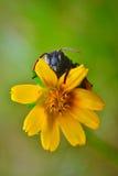 veja atrás da flor Imagem de Stock