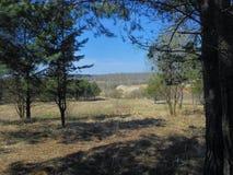 Veja fora do bosque dos pinhos Fotografia de Stock Royalty Free