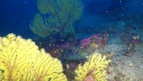 Veja gorgonians do throgh no recife mediterrâneo profundo video estoque