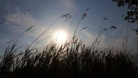 Veja o céu quando visto através das partes superiores da grama Vista inferior do sol através da grama fotografia de stock royalty free