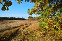 Veja o prado do outono e uma estrada de terra com fotografia de stock royalty free