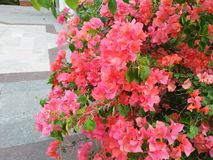 Veja que esta flor é muita e encantar imagens de stock
