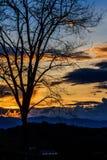 Veja a sombra das árvores e o céu no por do sol como o fundo Imagens de Stock