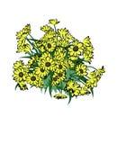Vektor av blomman Arkivfoton
