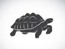 Vektor av en sköldpadda på vit bakgrund reptil stock illustrationer