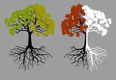 eichenbaum in vier jahreszeiten stockbild bild von