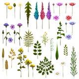 Vektor Blumen-Art Brushes für Ihr Design Stockfotos