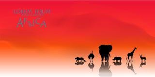 Vektor des afrikanischen Hintergrundes der wild lebenden Tiere Stockbild