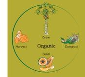 Vektor des biologischen Lebensmittels Lizenzfreies Stockfoto