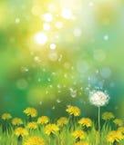 Vektor des Frühlingshintergrundes mit Löwenzahn. Lizenzfreie Stockbilder