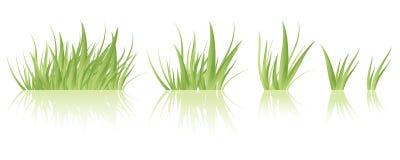 Vektor des grünen Grases Lizenzfreies Stockfoto