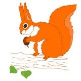 Vektor-Eichhörnchen mit der Eichel, die auf dem Baum sitzt Stockbilder